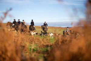 image of horses and hounds